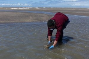 Releasing a stranded Franciscana dolphin