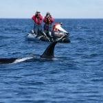 FEROP orca research