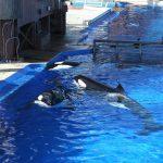 orca-group-capitvity-rob-lott